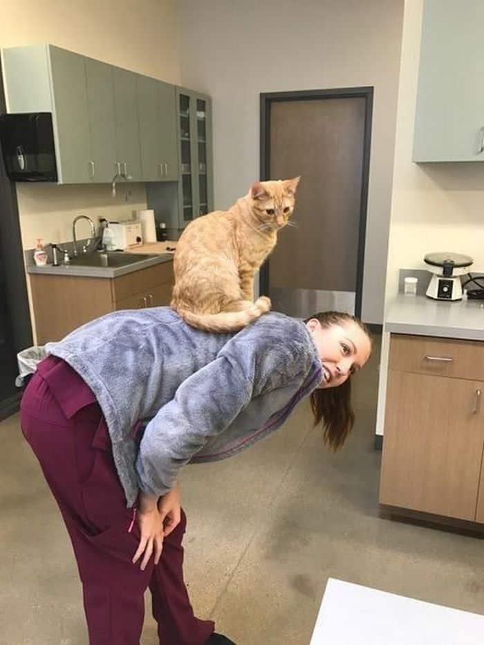 Кот и ветврач