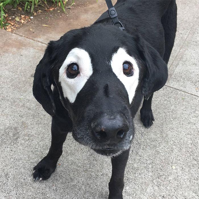 Собака с белыми пятнами