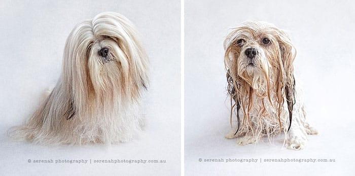 Смешная собака в ванной