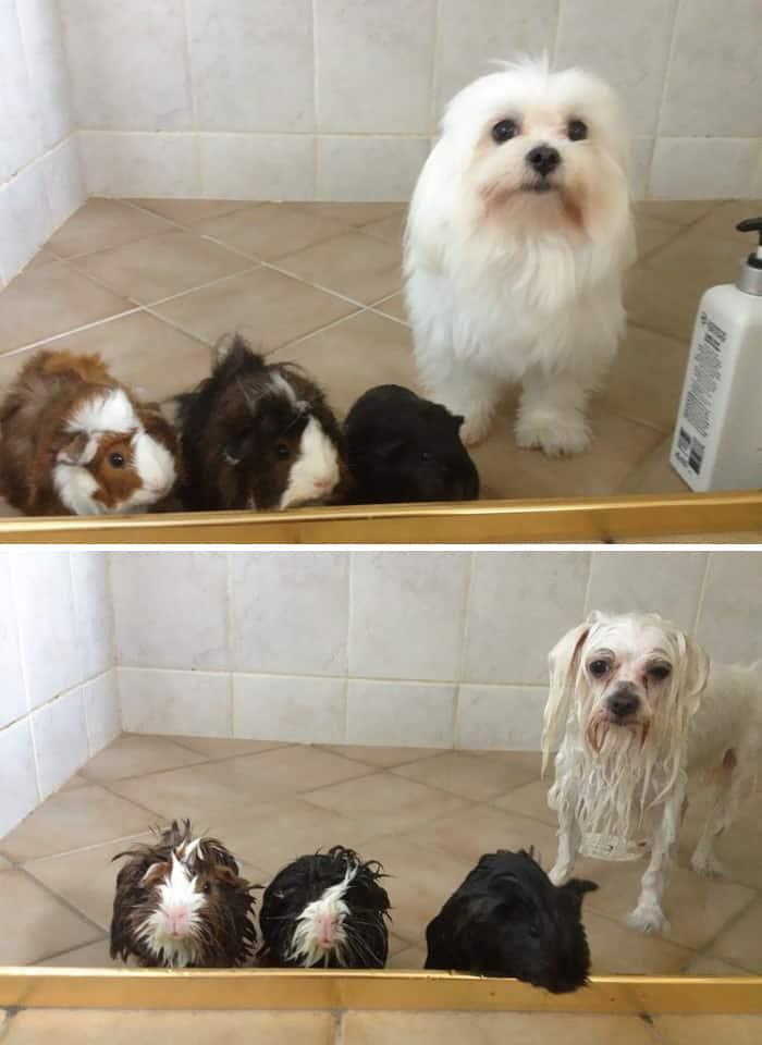 Смешные собаки в ванной