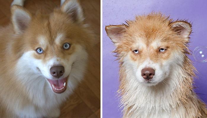 Смешные собаки в душе
