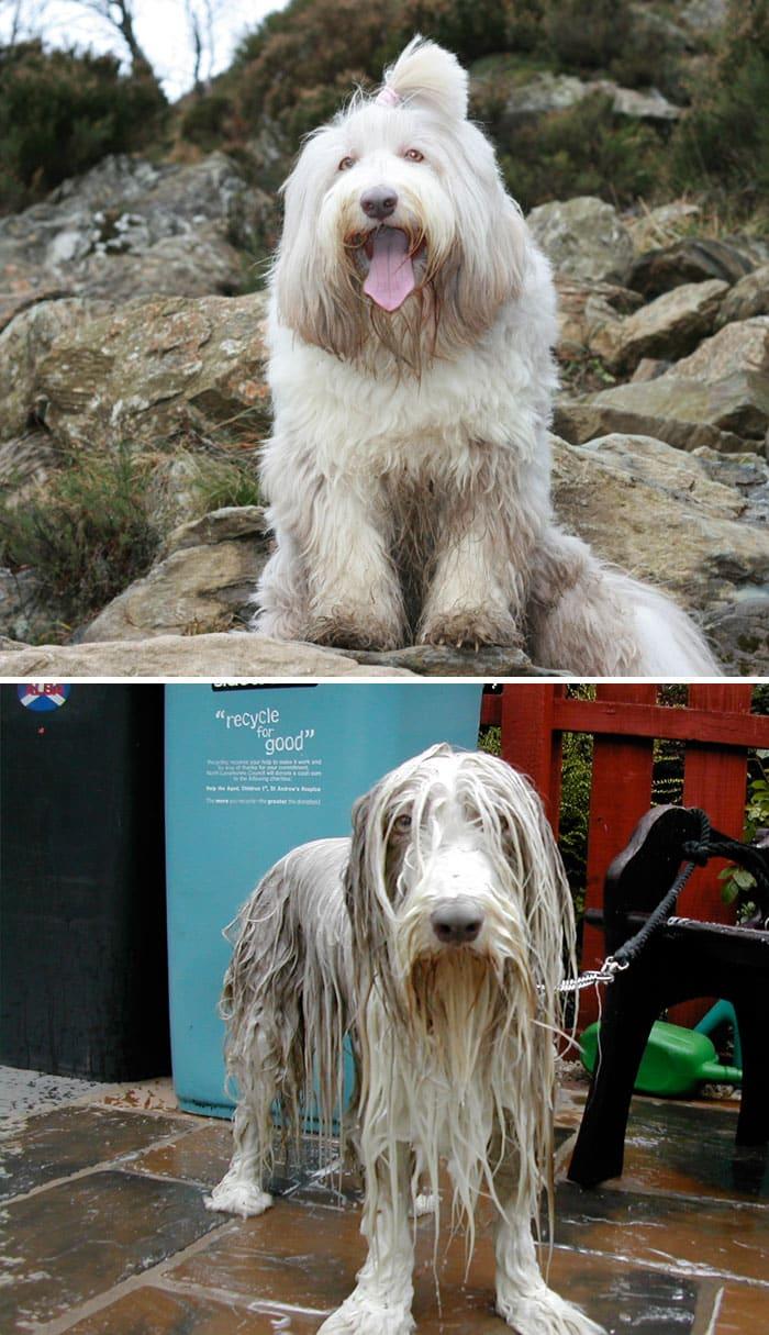 Смешная собака под душем