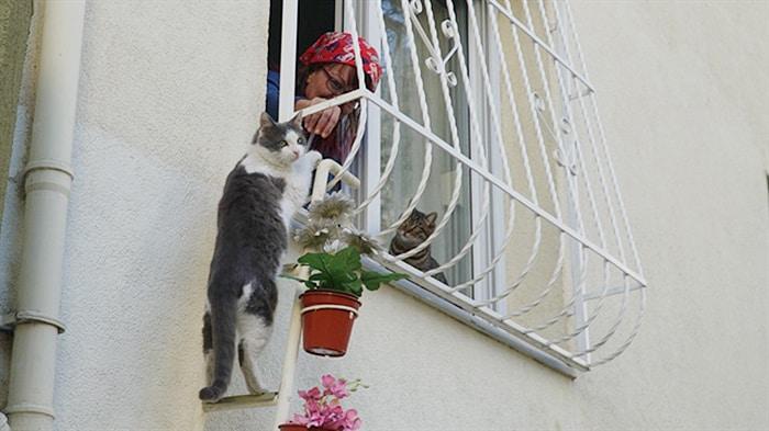 Проход для кошек