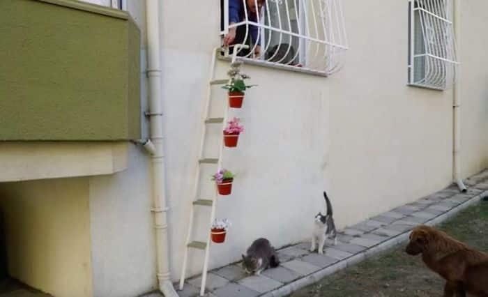 Лестница только для кошек