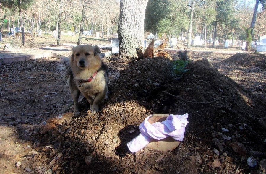 Собака на могиле