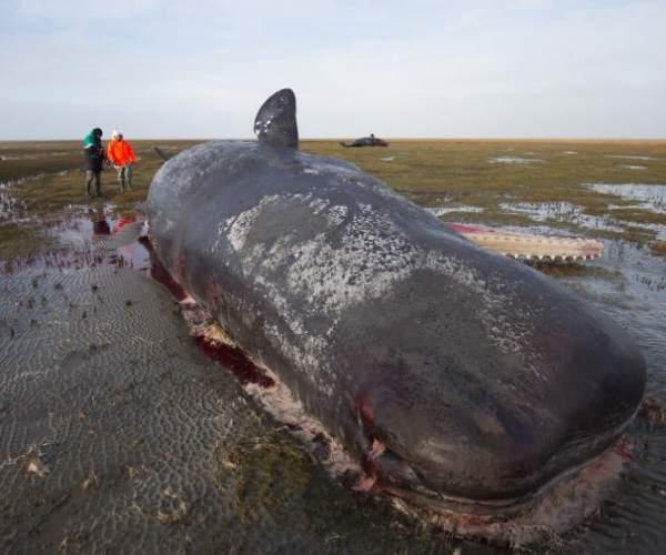 Погибший морской гигант