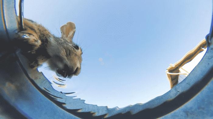 Животные на водопое