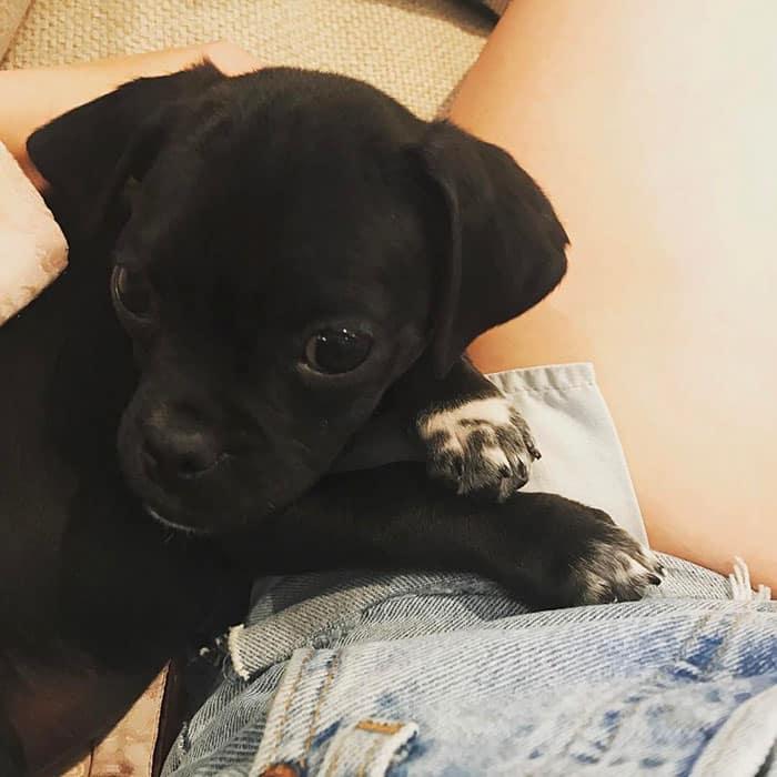Спасенный щенок из приюта для домашних животных
