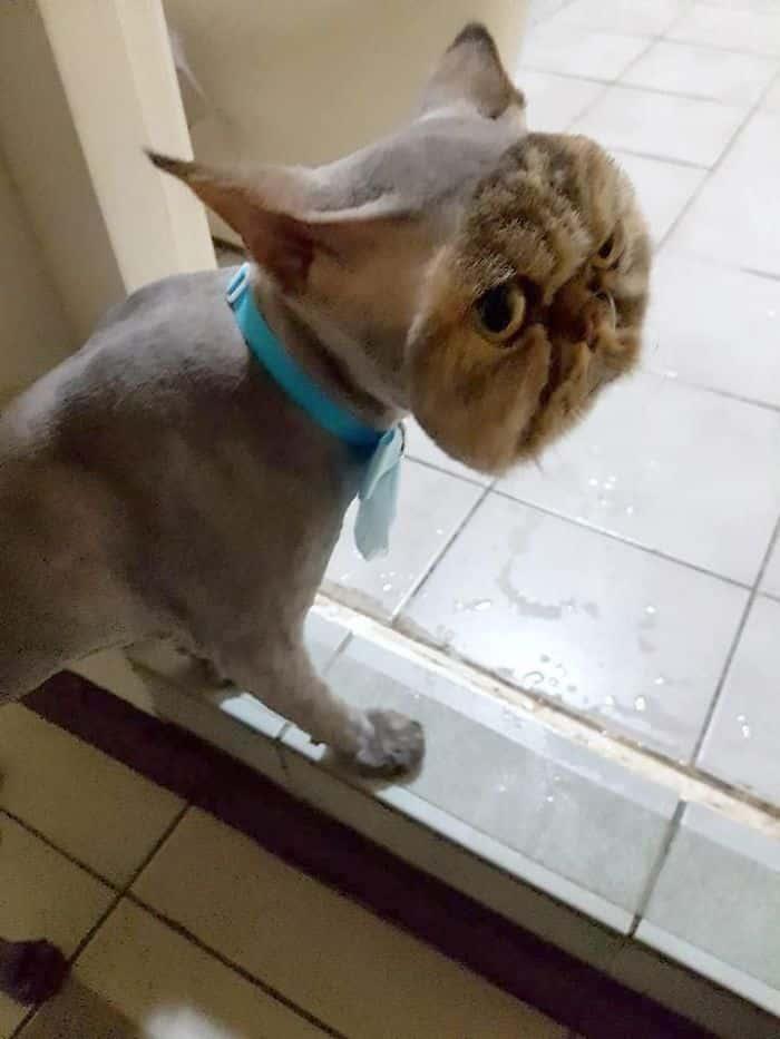 Кот-хипстер