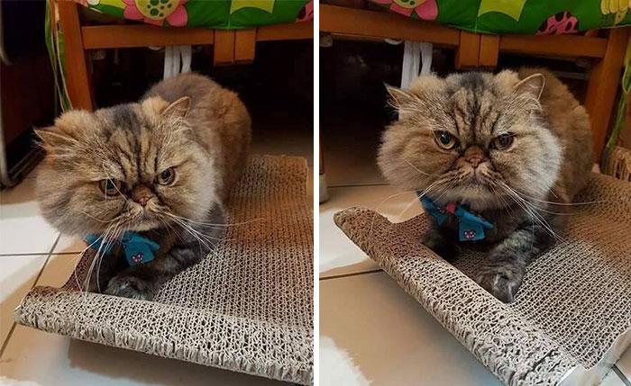Опозоренный кот