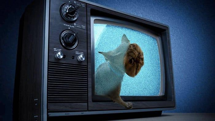 Фотошоп кота