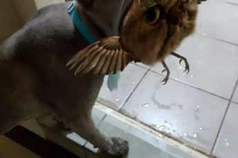 Смешной кот после парикмахерской