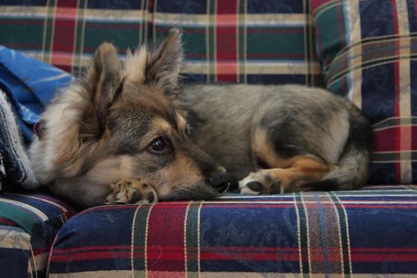 Помесная порода собак
