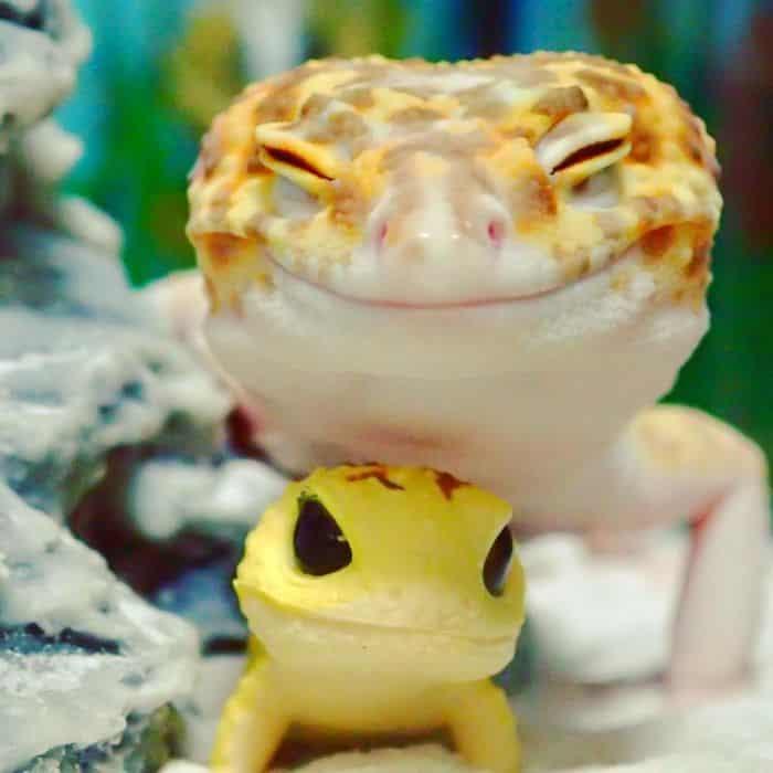 Улыбающийся геккон с игрушкой