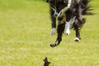 Собака испугалась мышь