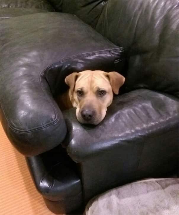 Непослушные и умные собаки