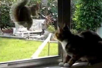 Белка издевается над котом