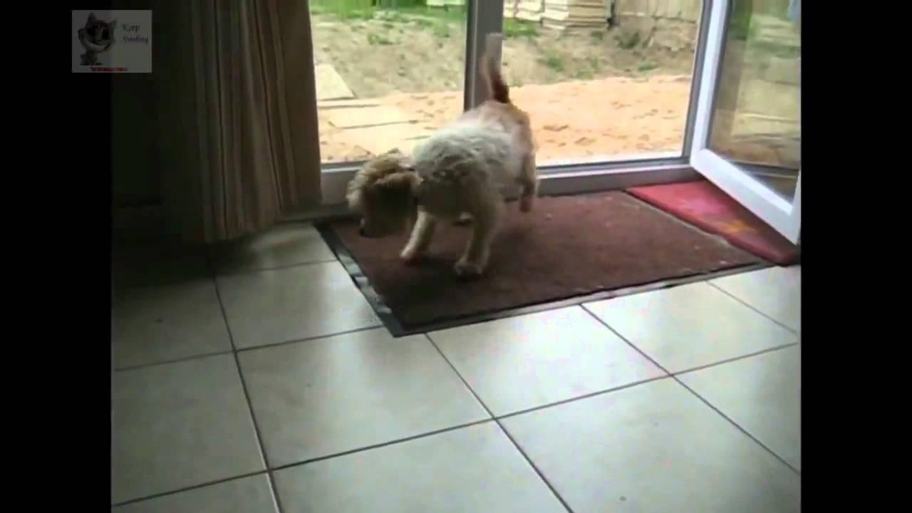 Самая чистоплотная собака в мире