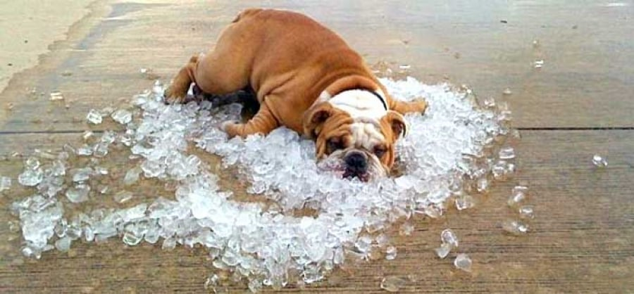 Собака во льду