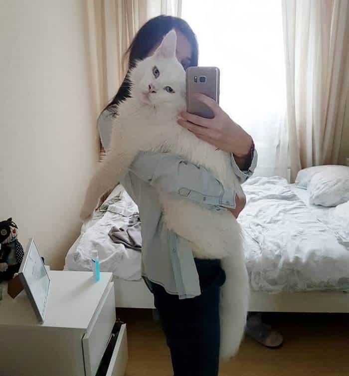 Селфи с котом