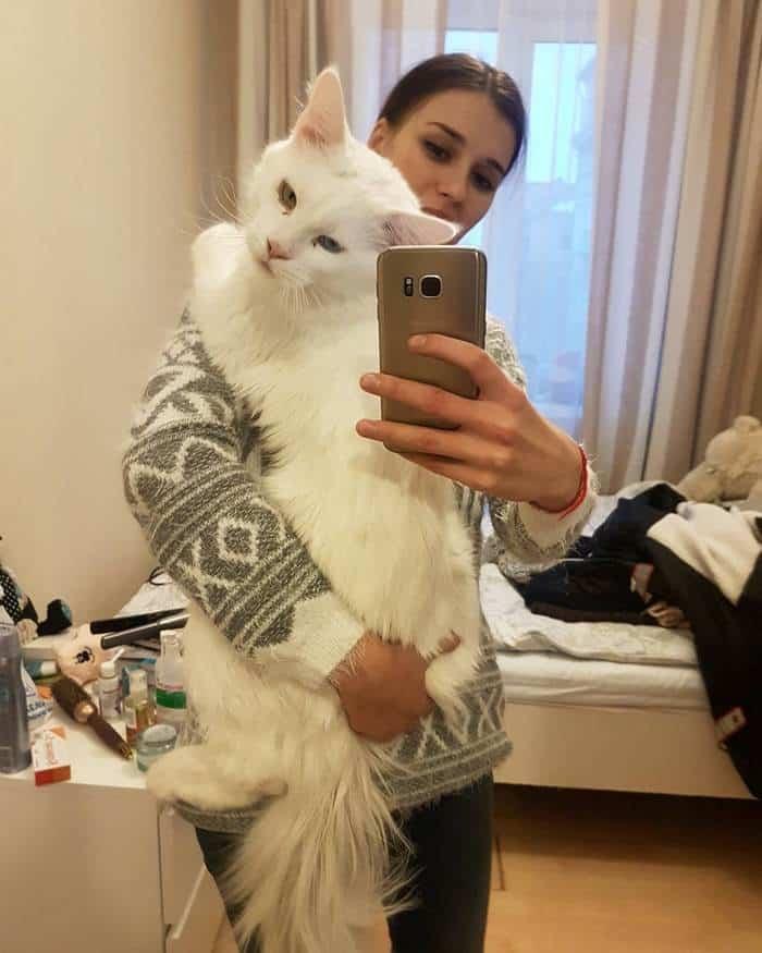 Фотография громадного кота