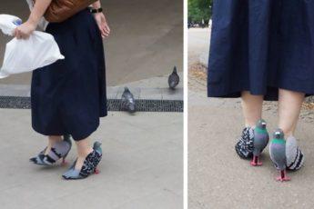 Голубиные туфли
