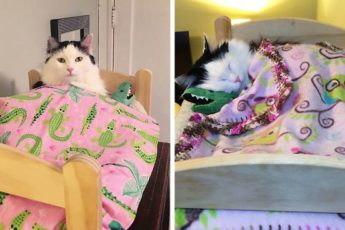 Кошка в человеческих условиях