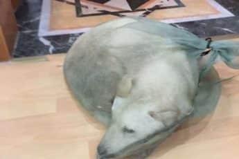 Спасенный пес