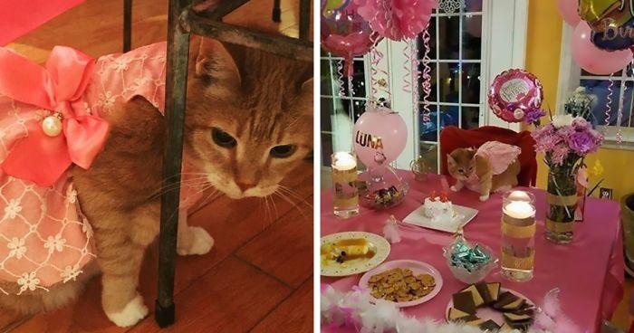 Обряд посвящения для кошки