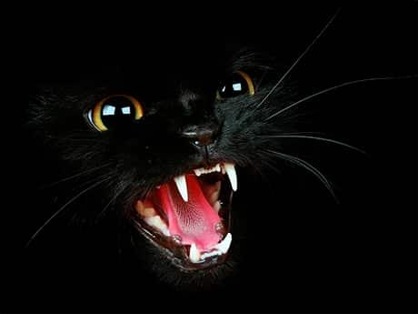 Мистическая кошка