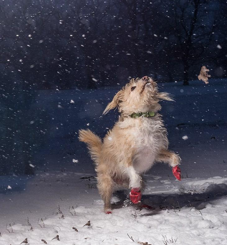 Победитель конкурса собак