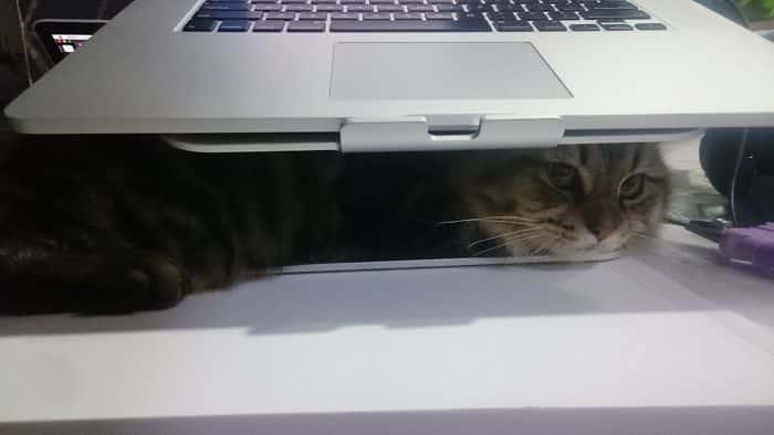 Кошки, застигнутые врасплох