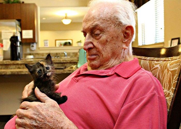Кошки и пожилые люди
