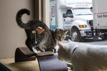 Кафе для кошек