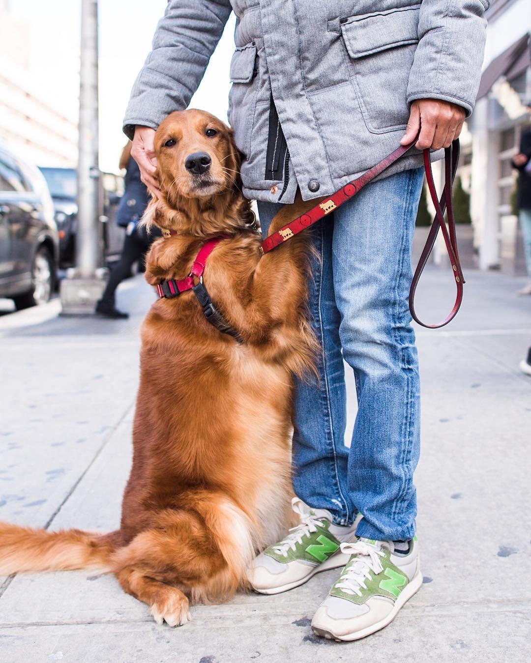 Собака-обнимашка