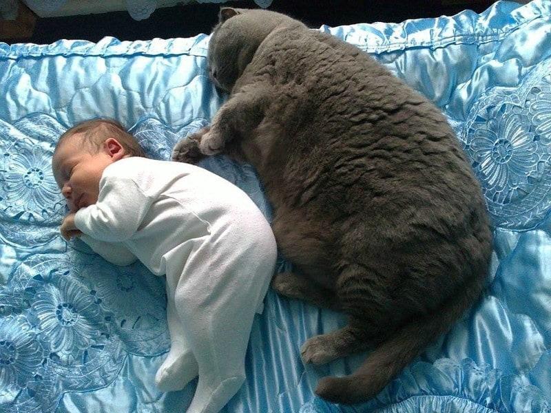 Котики и  дети