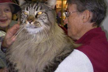 Гигантские коты