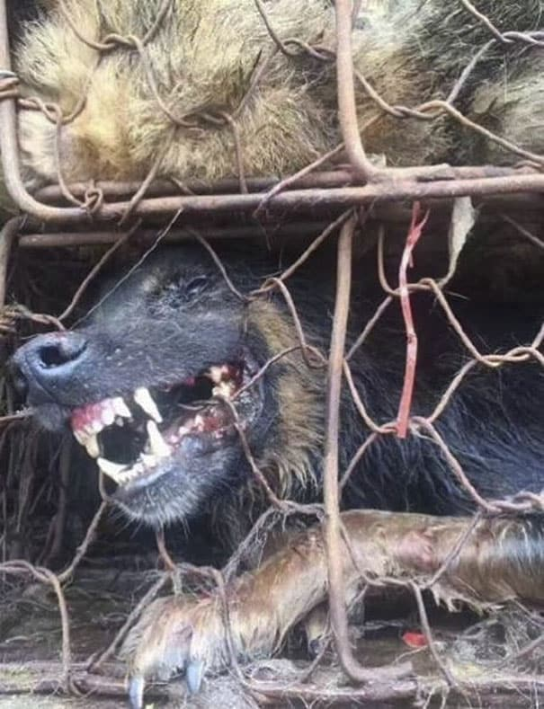 Массовое истребление собак