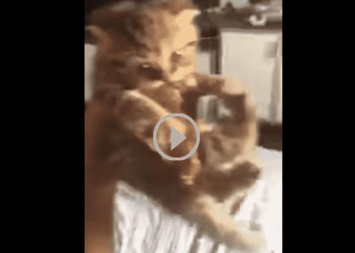 Котенок борется за свое мясо