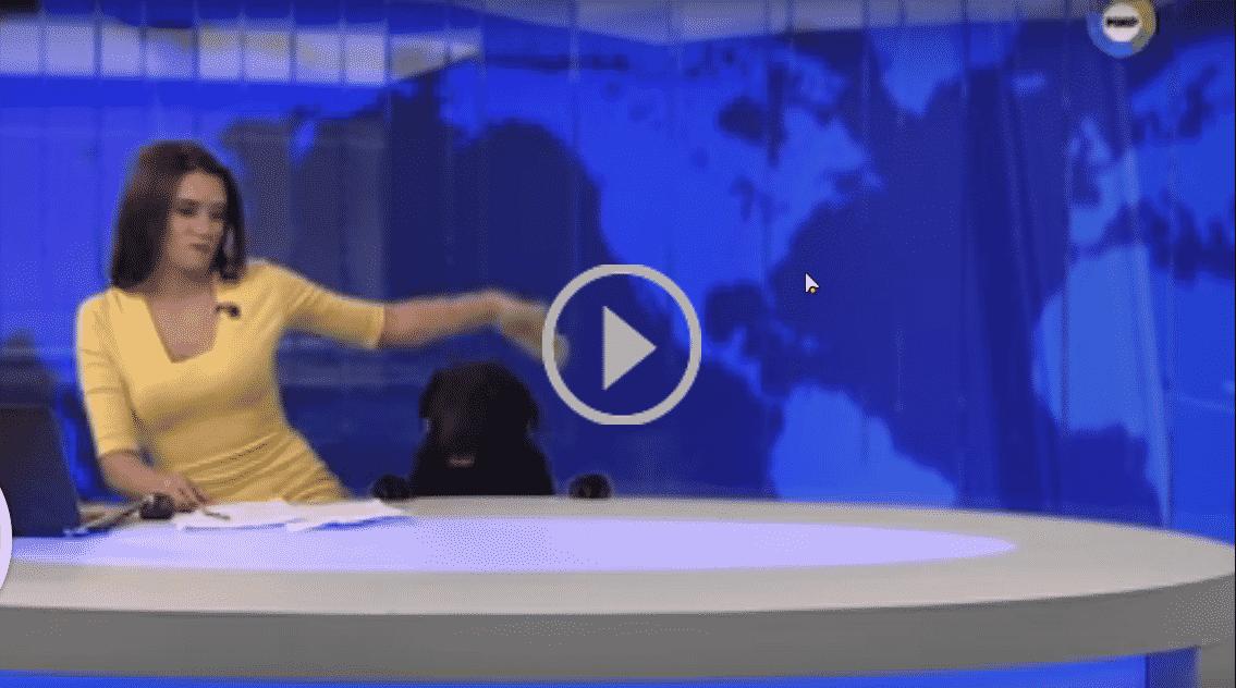 Собака в прямом эфире