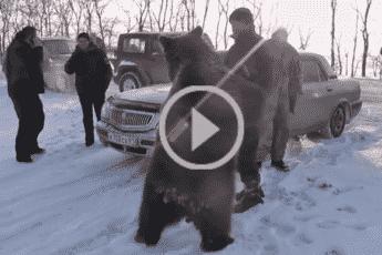 Ручной медведь Яша