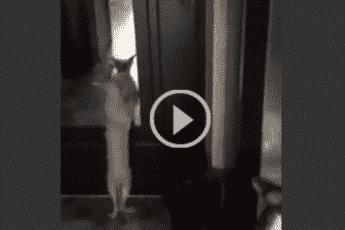 Крот танцует в такт музыке