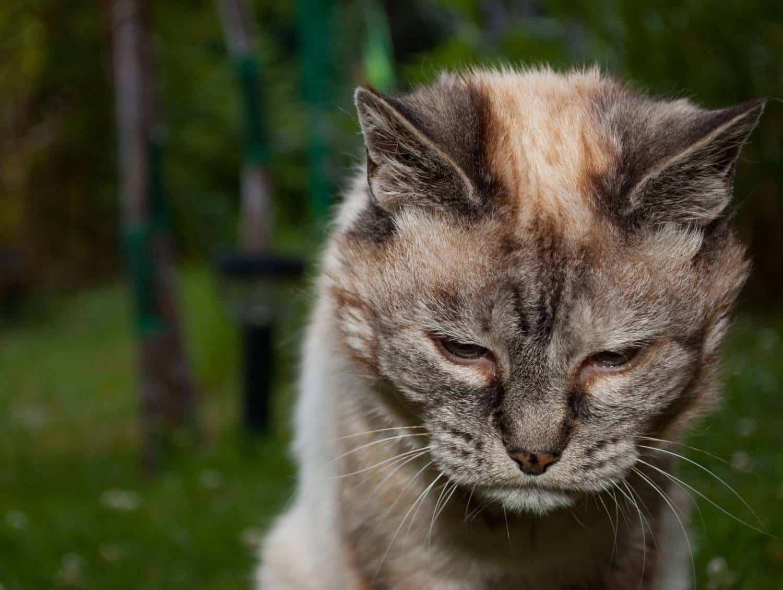 Совсем старая кошка