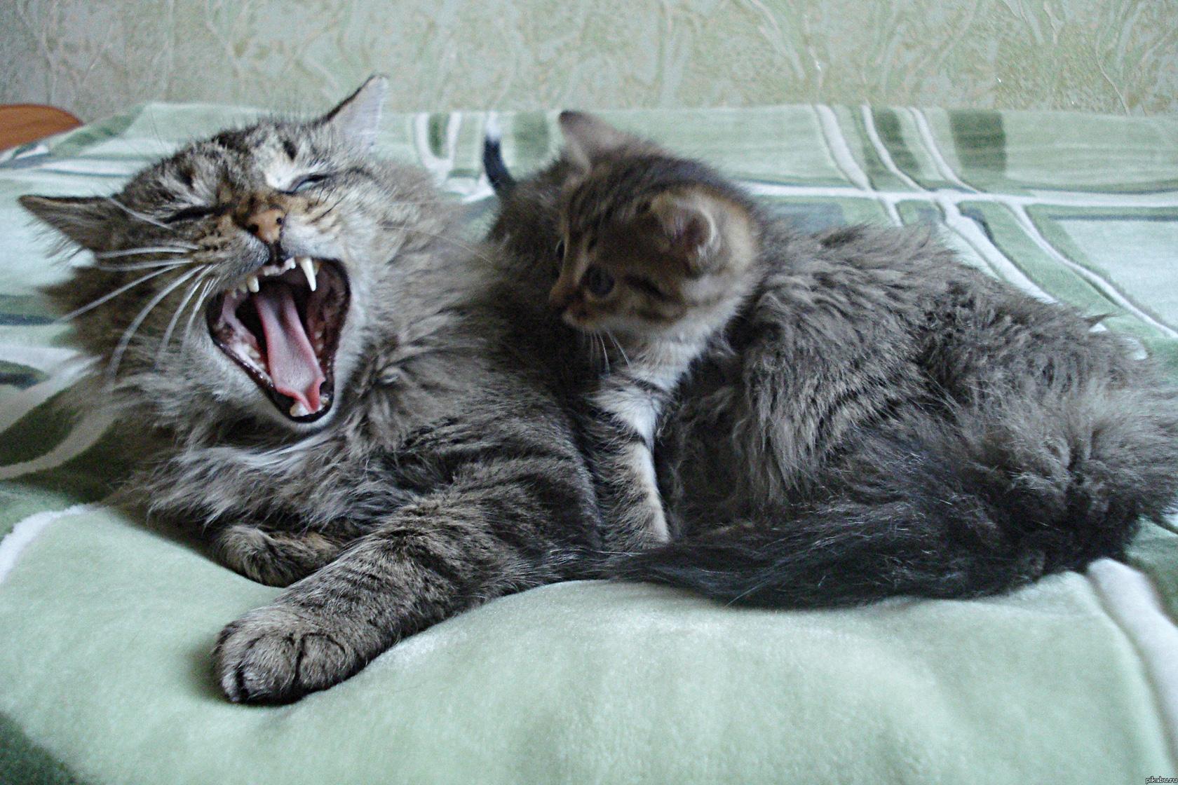 Матерый кот
