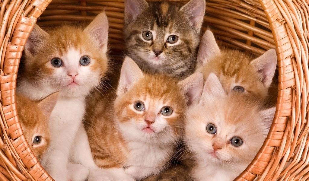 Гибель кошек