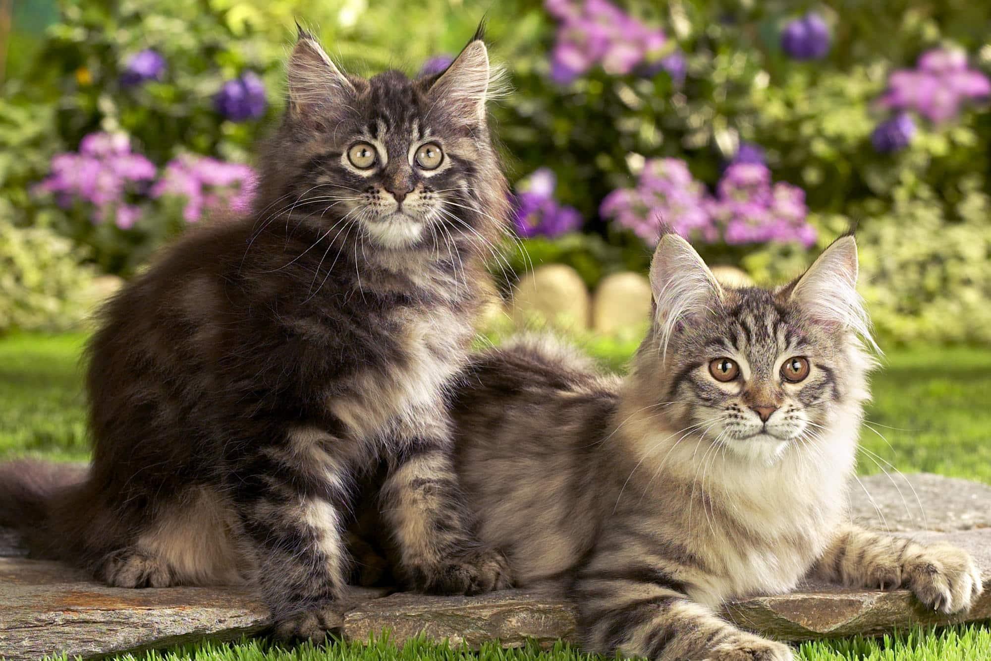 Гибель кошек во Франции