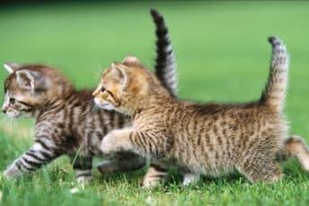 Котята на прогулке