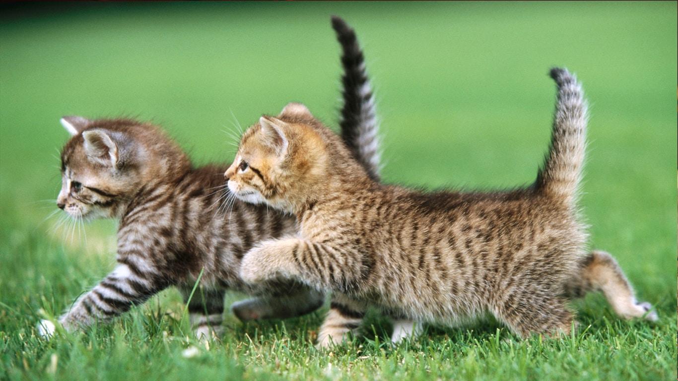Котята в опасности