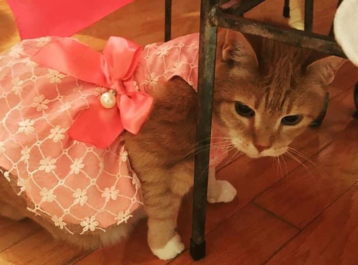 Настоящий праздник для кошки