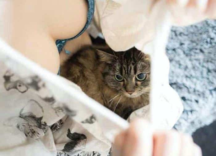 Кошка на женской груди